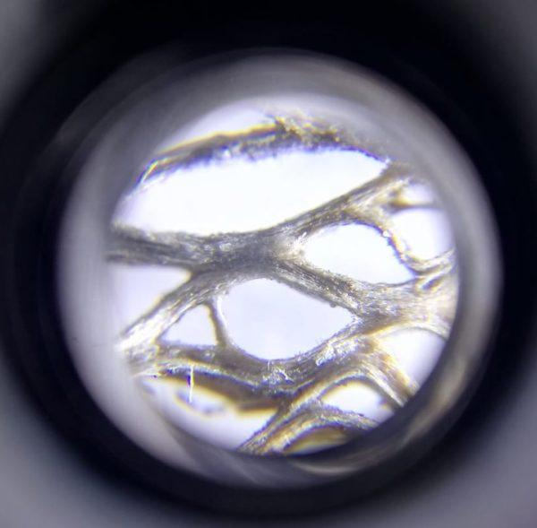 Foto de Salem, cactus seco. Microscopio 60X